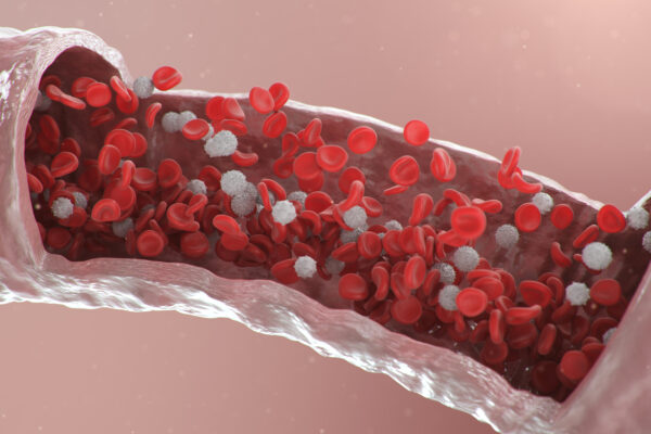 Red blood cells in an artery illustration