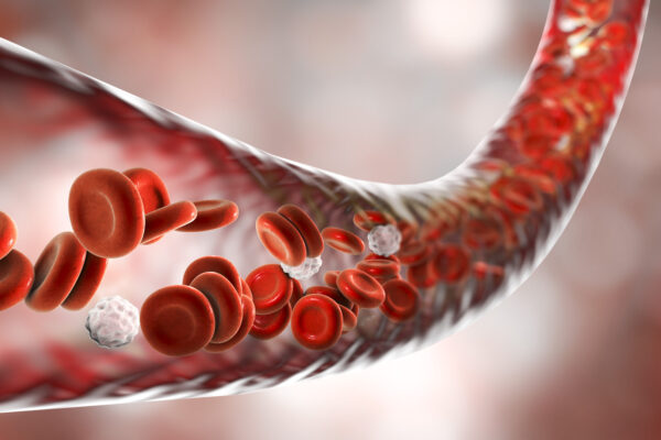 Flowing red blood cells in an artery illustration