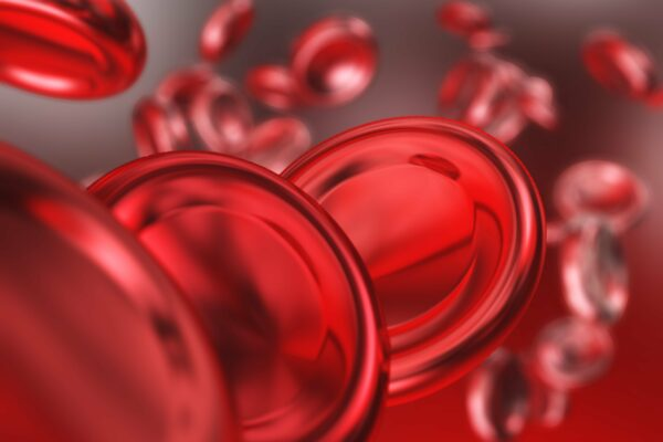 Close up picture of red blood cells